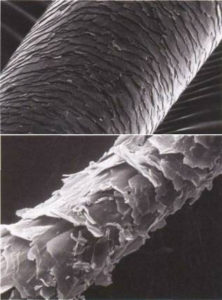 haircuticle under a microscope showing health or damage